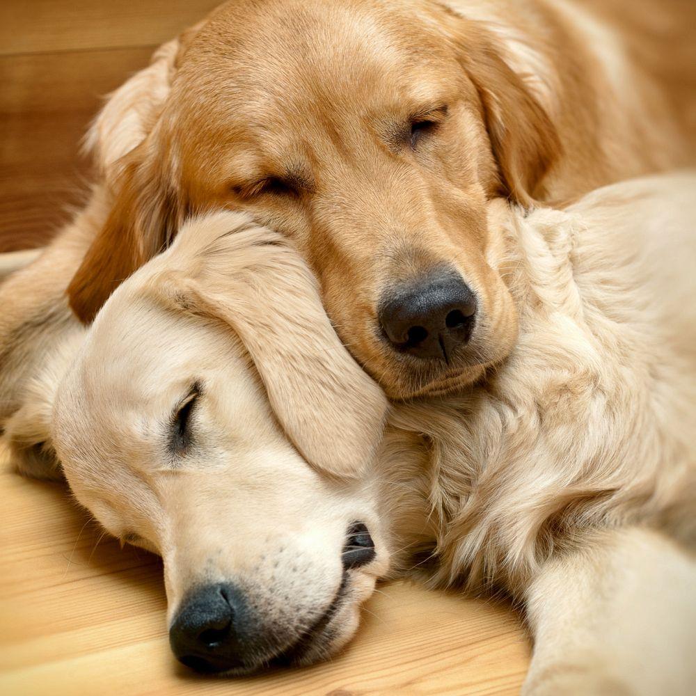 Police Dogs Sleep