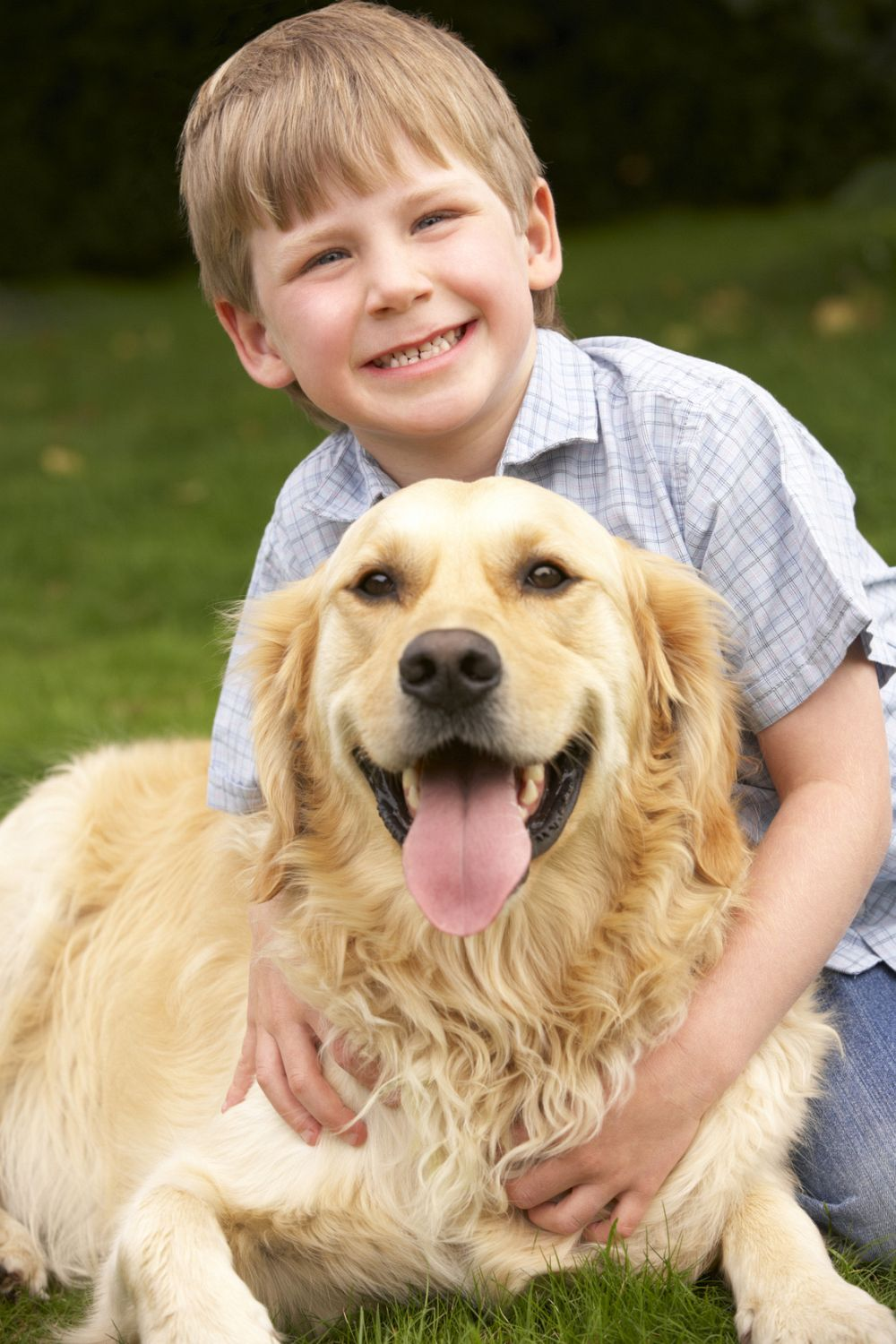 Golden Retriever als Therapiehund