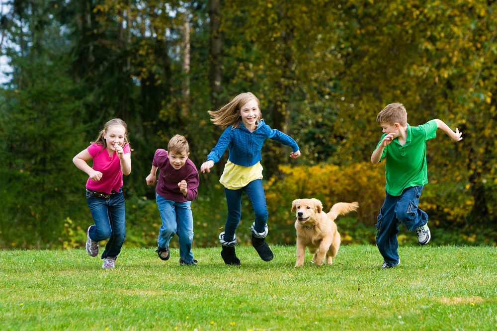 Kinderlieb Golden Retriever