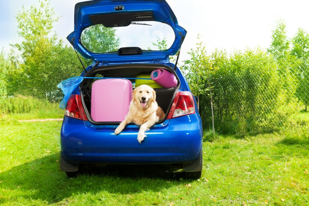 Urlaub mit Golden Retriever im Auto
