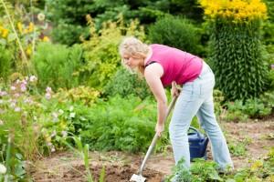 Meinen Golden Retriever im eigenen Garten vergraben. Worauf muss ich achten?