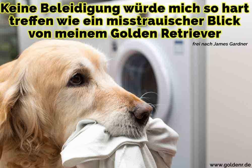 Ein Golden Retriever in der Wäsche