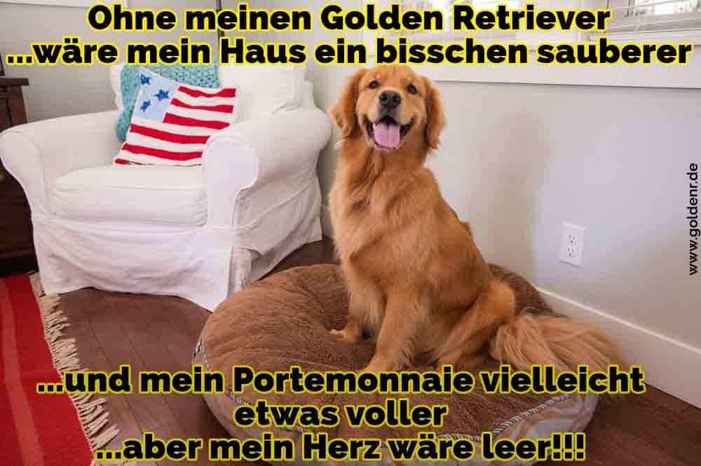 Ein Golden Retriever im Raum sitzt