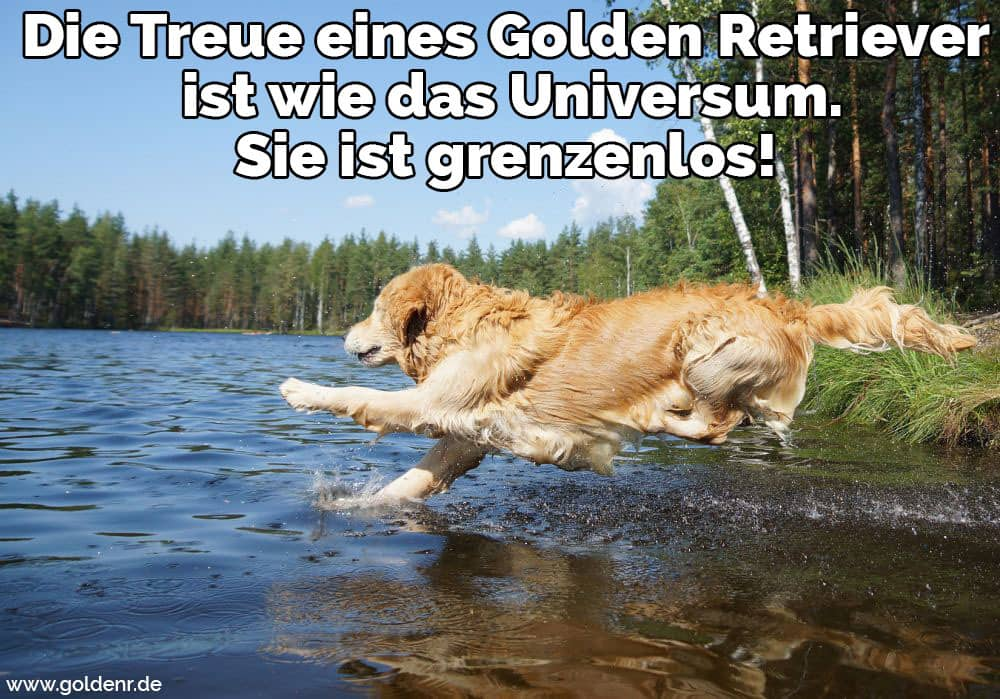 Ein Golden Retriever in den Fluss springen