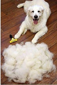 So viele Haare konnten mit dem Furminator entfernt werden. Irre.